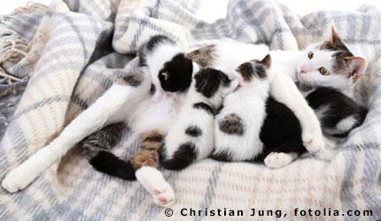 rechtliche aspekte der katzenhaltung in mietwohnungen. Black Bedroom Furniture Sets. Home Design Ideas